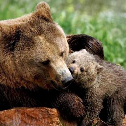 Mamma-e-figlio-orso