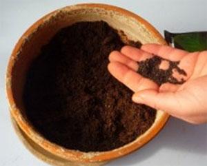 Il basilico for Coltivare il basilico