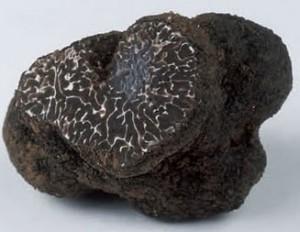 tartufo-nero-liscio