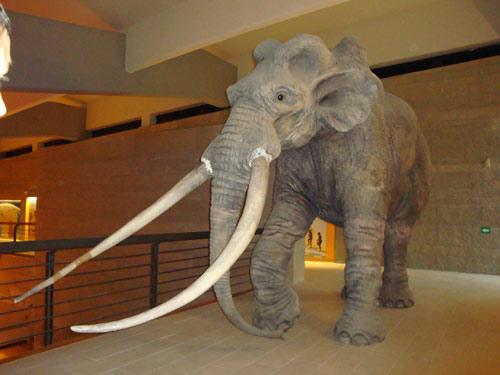 Museum-Paleolithic-elephant