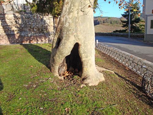 Tree-Isernia-Molise