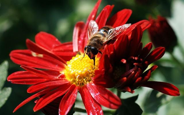 ape-fiori