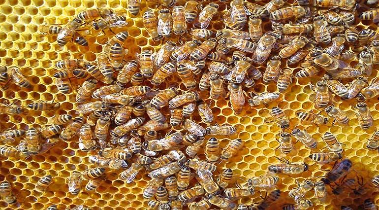 Le fasi del miele – Apicoltura api