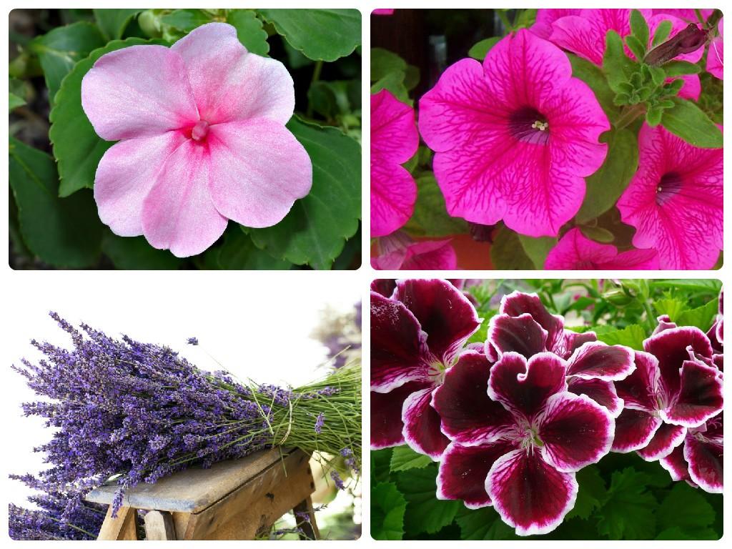 Come arredare il balcone di casa o il terrazzo - Fiori da giardino estivi ...