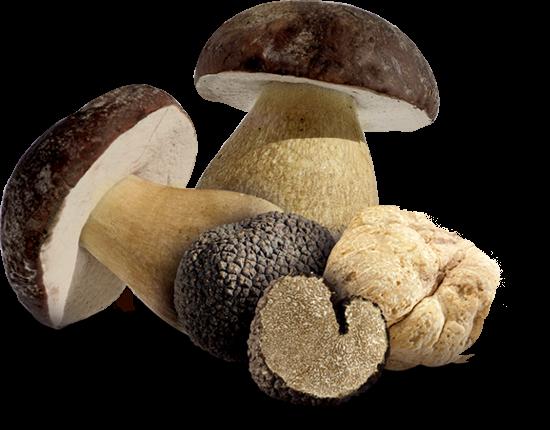 funghi-e -tartufo