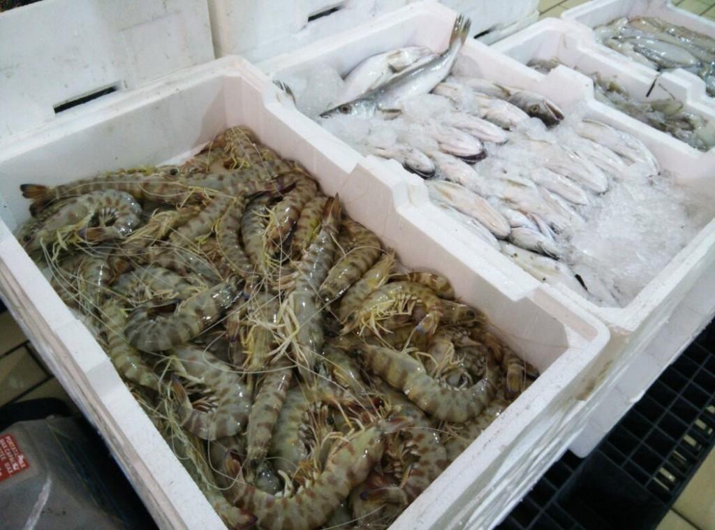 pesce-termolese
