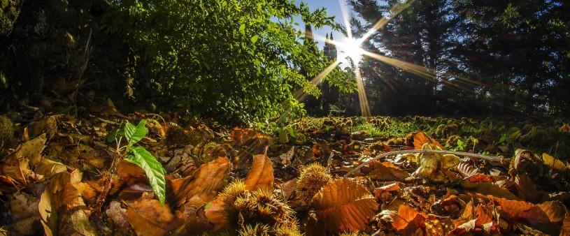 autunno-castagne