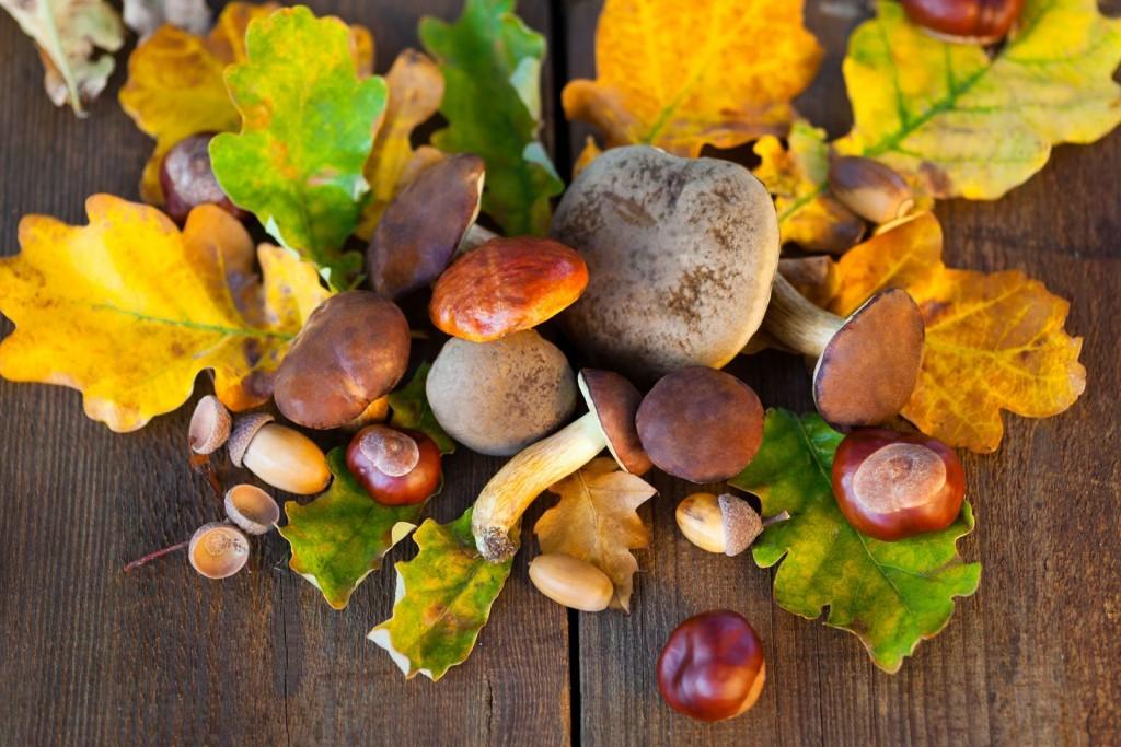 castagne-autunno