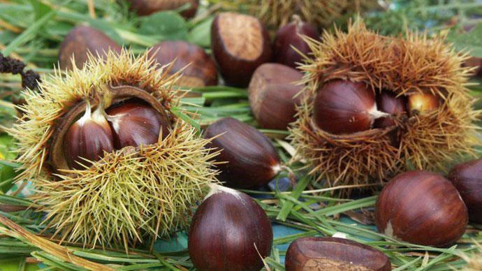 Le Castagne frutto tipico autunnale ricco di sali minerali