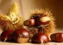 Le Castagne frutto tipico autunnale